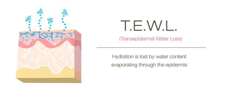 t.w.e.l.-1.jpg